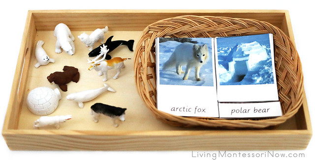 Safari Ltd Arctic Figures with Montessori 3-Part Cards