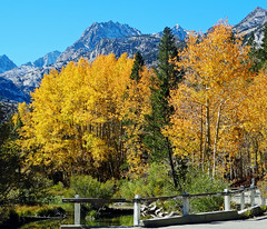 Autumn at Bishop Creek Bridge, Sierra Nevada Range, CA 10-18