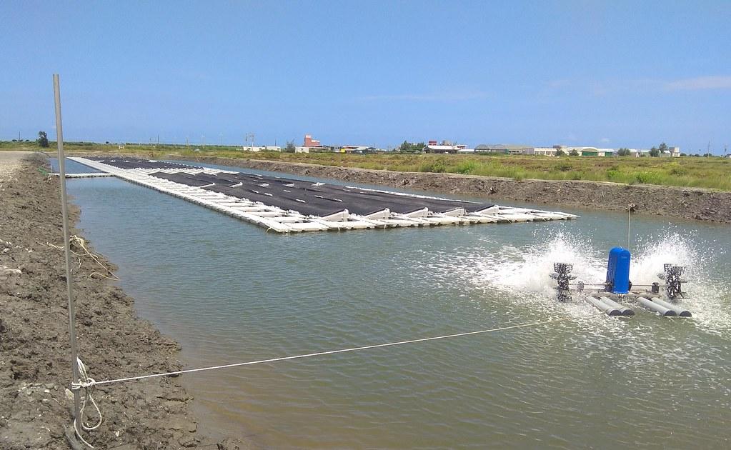 水試所模擬光電結合吳郭魚、石斑、鱸魚的養殖。圖片來源:農委會