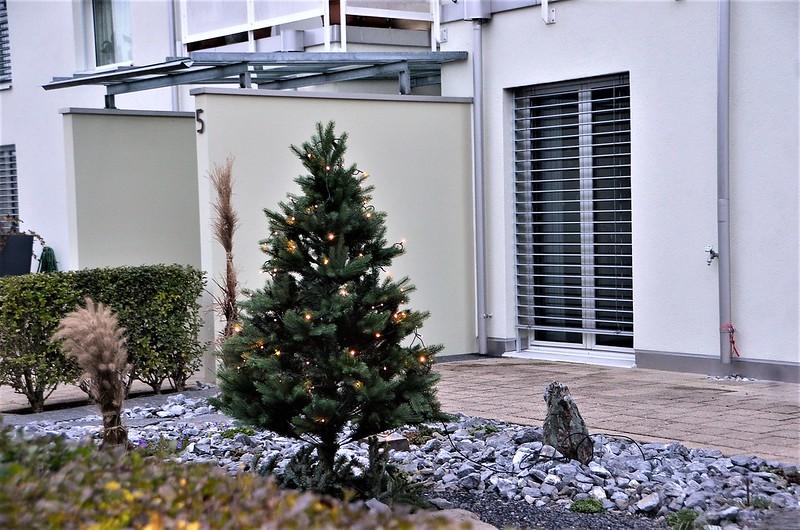Christmas Tree Estate 28.11.2018