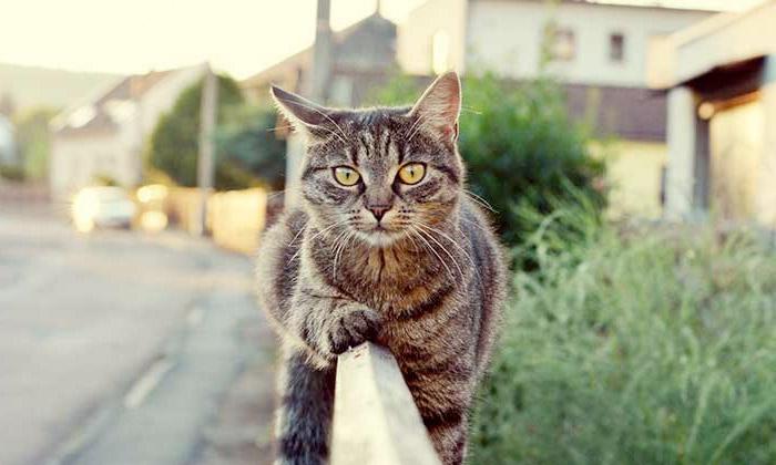 Язык тела кошек фото