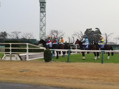 中山競馬場の5号生垣障害にやってきた馬たち