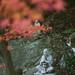 天祐寺の紅葉 by HRS_Kenzy