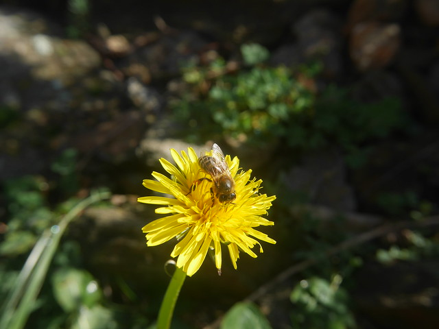 abeilles 45976343972_d256f8b54b_z