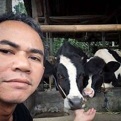 Sapi-nya fotogenik, :grin:. #cow #dairy #village