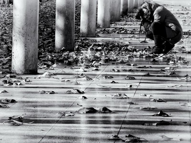 Una chica agachada fotografiando las hojas caídas de los árboles