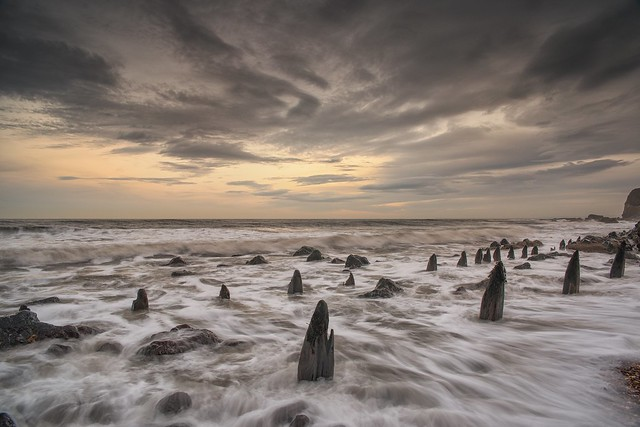 The old wooden stumps, Nikon D810, Sigma 24-70mm F2.8 IF EX DG HSM