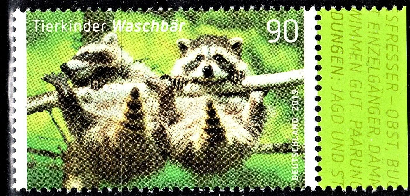 Germany - Young Animals: Racoon (January 2, 2019)