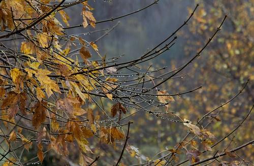 Couleurs d'automne - 2018 30883133647_7787d2f65a