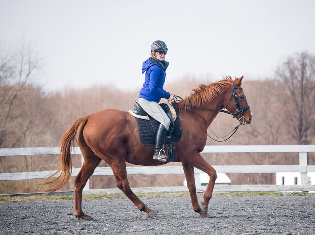 20181116 Austen's Ponies_12