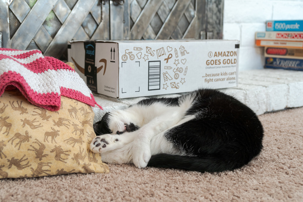 Our cat Boo sleeps curled up on the carpet beside the fireplace of our house in Scottsdale, Arizona