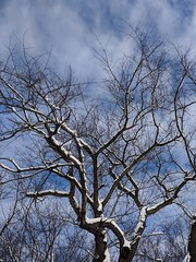 Branches, snow and sky