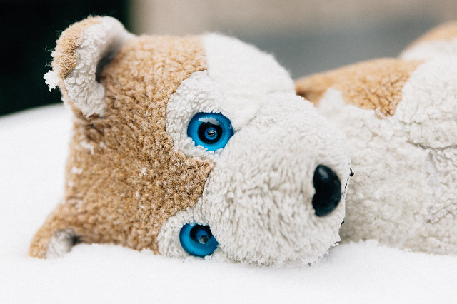 Wolfi in the Snow, Canon EOS 5D MARK II, Sigma 24-70mm f/2.8 EX