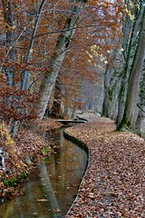 Herbst/ Autumn