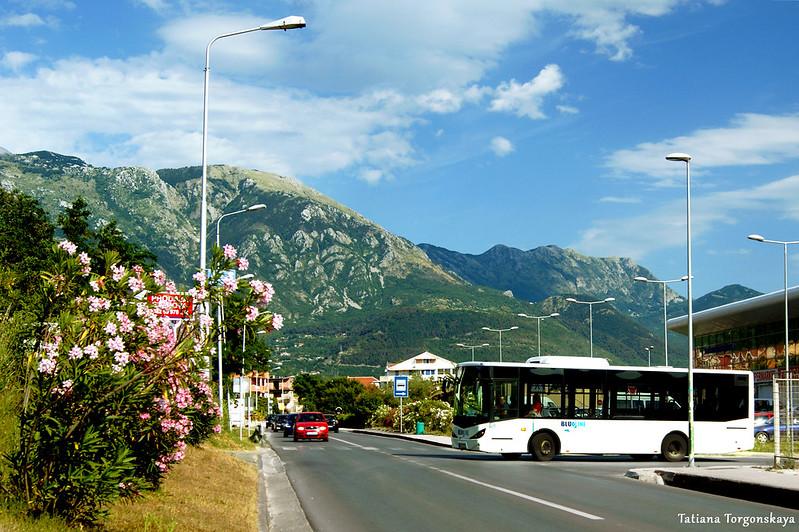 """Автобус """"Blue line"""" возле автостанции Тивата"""