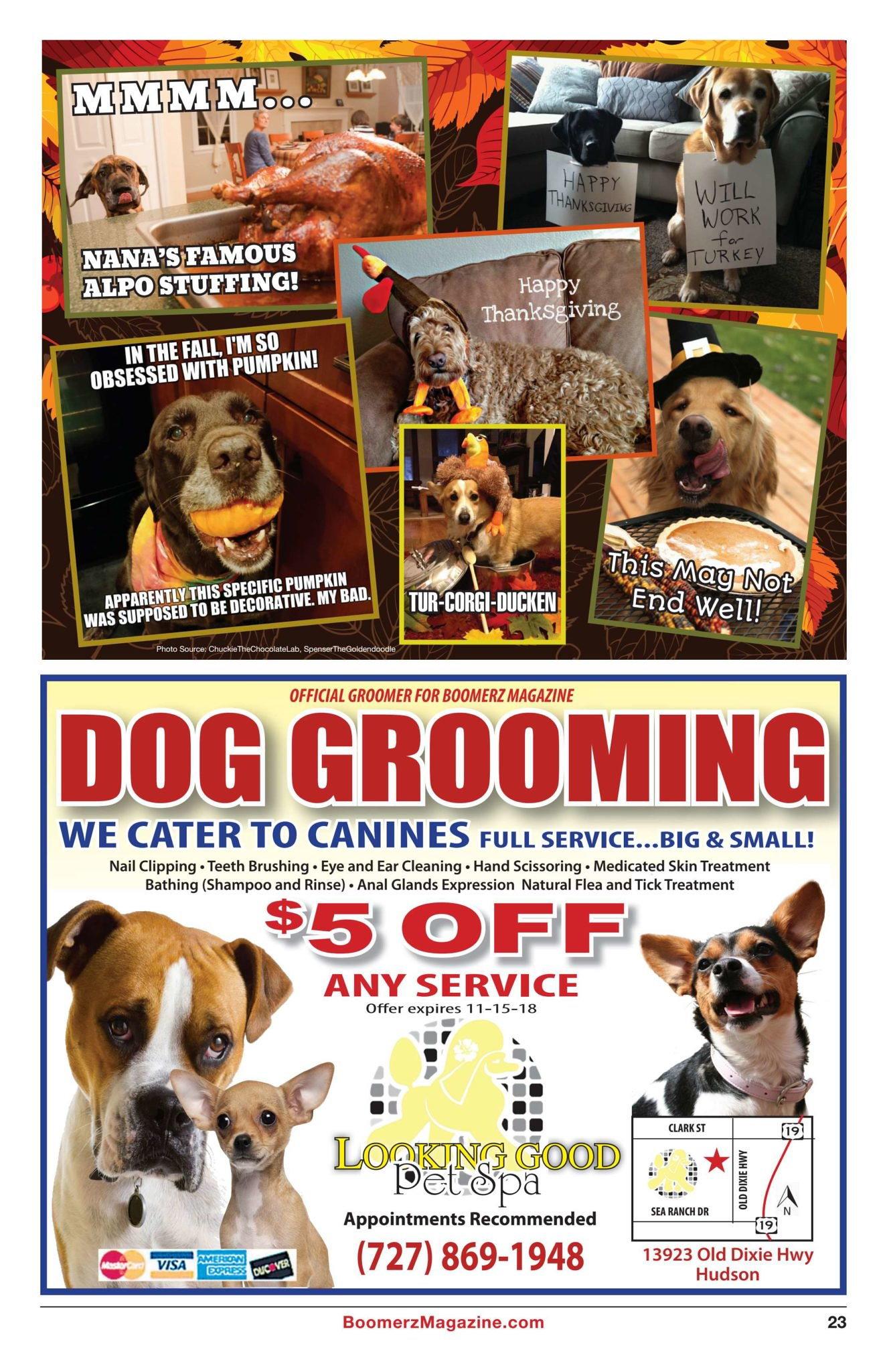 Boomerz Magazine 2018 November Dog Grooming