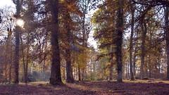 Contre jour forestier