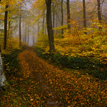 An autumnal path