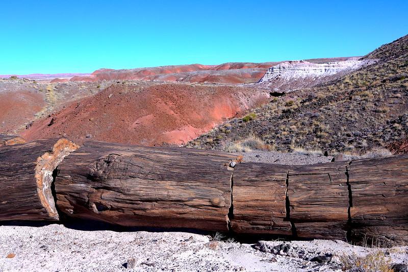 IMG_4989 Petrified Log, Petrified Forest National Park