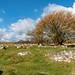 Field of sarsen stones