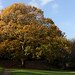 Autumn 2018 in south London   Crystal Palace-47