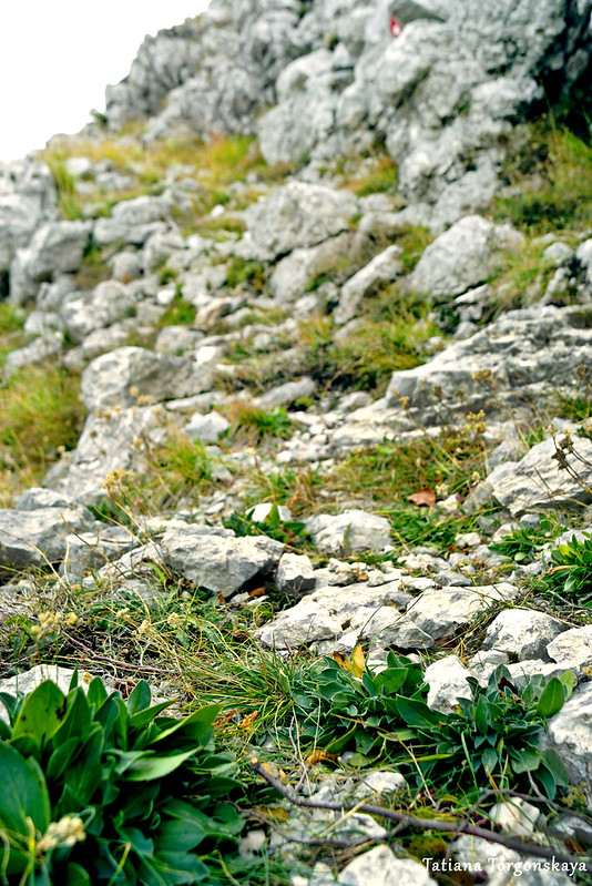 Дорога вверх, к Каменски Кабао