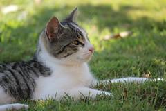 2011 03 20 Stripey (4)