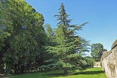 2018.06.22.085 MEZIDON-CANON - Château de Canon, le parc - Photo of Le Bû-sur-Rouvres