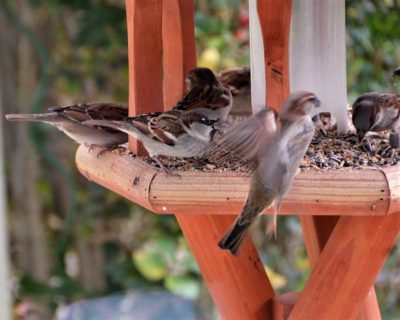 Sparrows 15.12 (7)