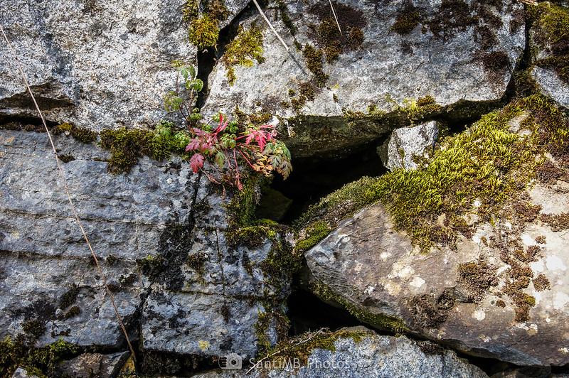Musgo y plantas en rocas en la pista de la Artiga de Lin
