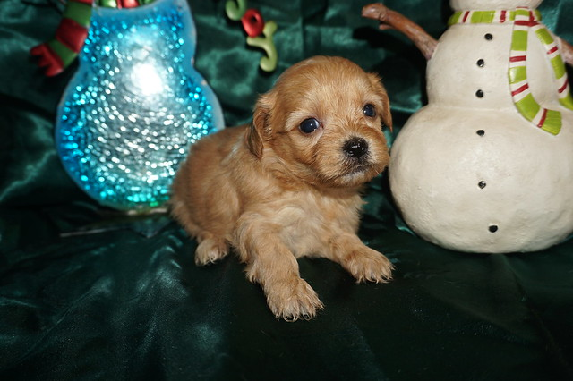 4 Milly 1.5lbs 4wks old (11)