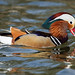 a Mandarin on a lake