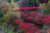 Photo:Izumi Nature Park By t.kunikuni