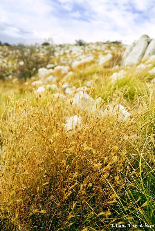 Желтая трава на вершине