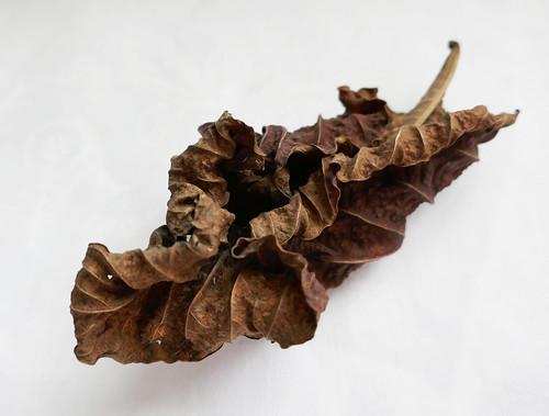 wRinkled bRown leaf
