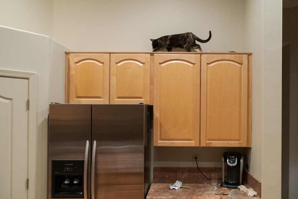 Our cat Trixie walks along the top of the kitchen cabinets as she explores on her first day in our new house in Scottsdale, Arizona