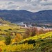 Wachau - SPITZ - Panorama mit Tausendeimerberg