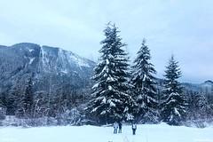 Winter Wonderland at Snoqualmie Pass
