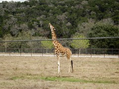 USA - Texas - San Antonio - Natural Bridge Wildlife Ranch
