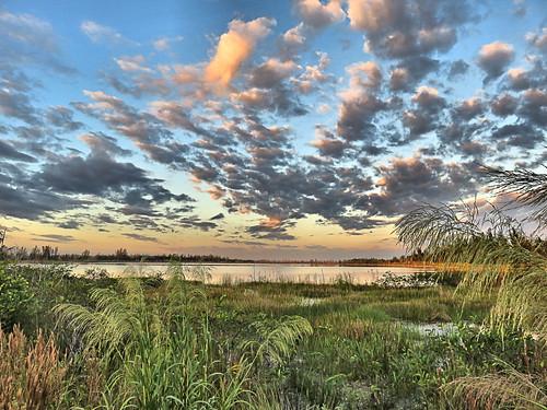 Lakeside marsh after sunrise 230181118
