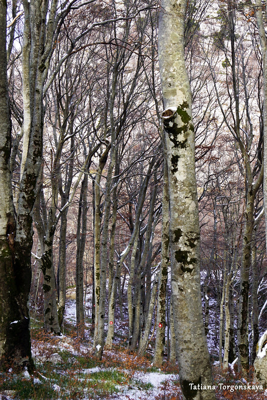 Пейзаж в буковом лесу