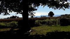 Vue sur les Pyrénées début novembre