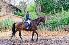 Venteille-concours-Marcheprime-2018-12-09-007 (Estelle) - Photo of Marcheprime