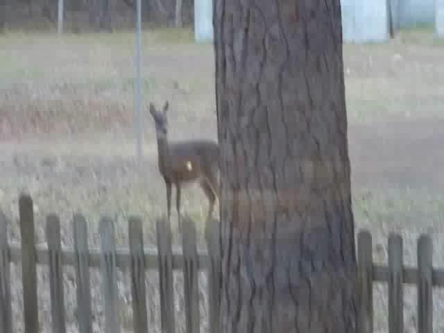 Deer_0001