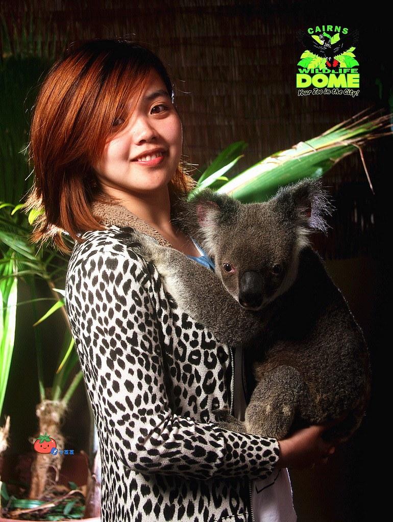 【澳洲】CAINS凱恩斯抱無尾熊 Cairns Wildlife Dome