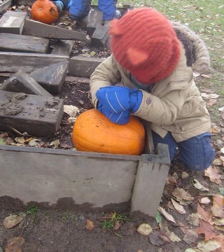 breaking up the pumpkin