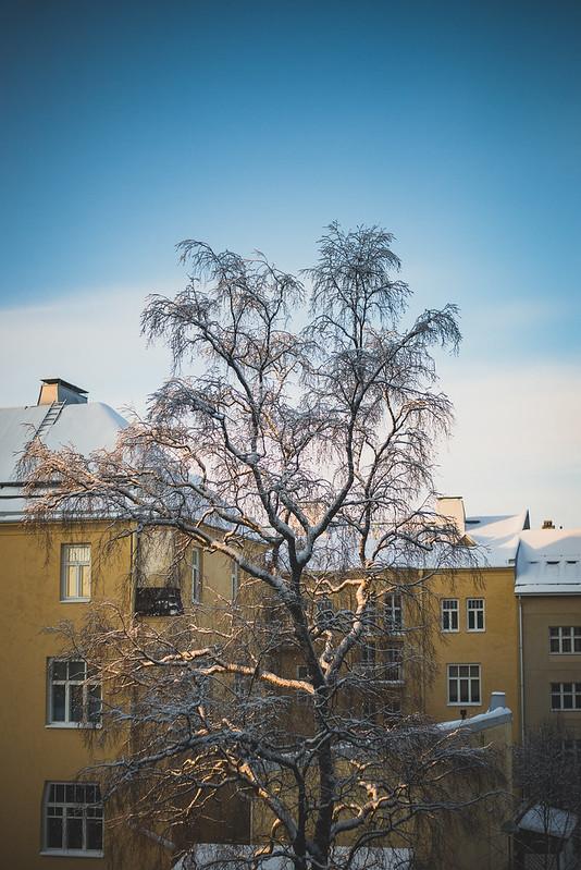 Winter sun-1