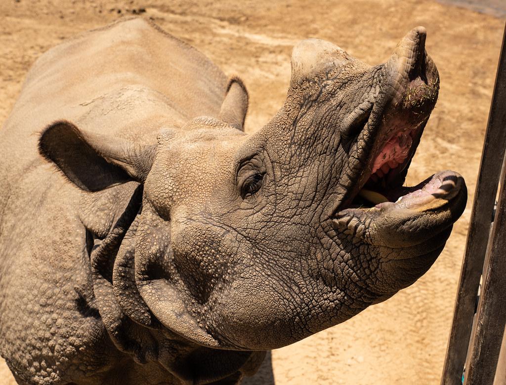 Rhino_7