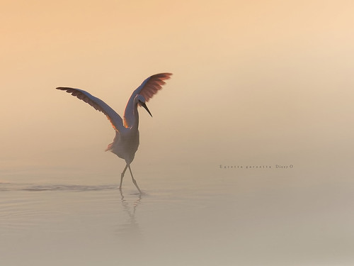 Dancing in the mist...