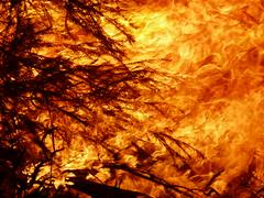 2008 10 31 Bonfire 30